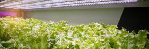 Indoor_gardening_winter