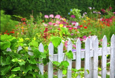 Garden_tips