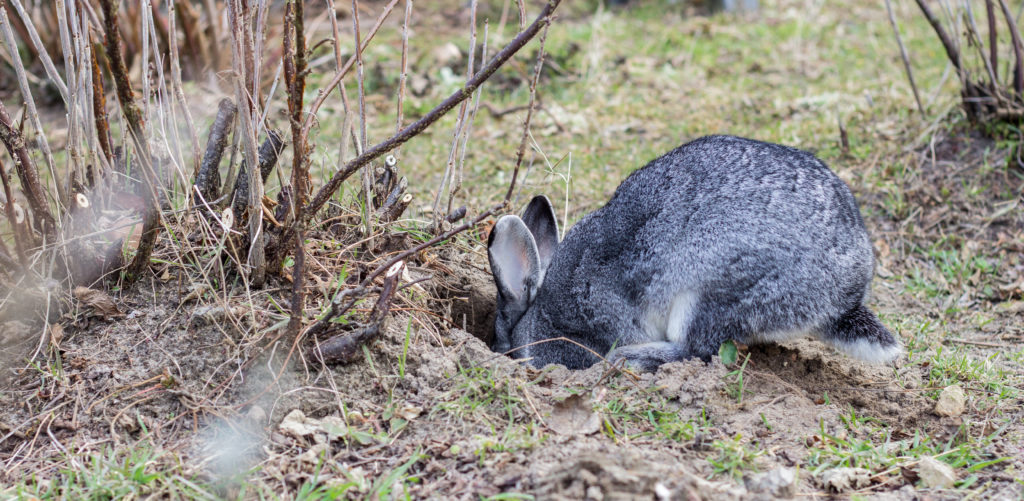 Protect your garden from rabbits.