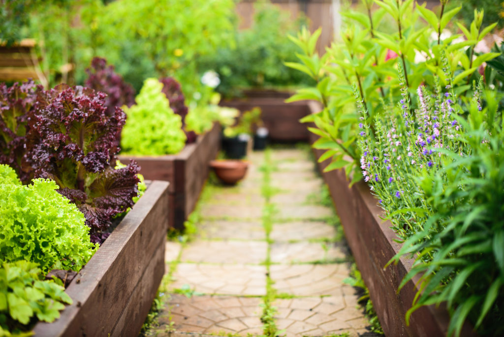 Protect your gardens from rabbits with raised garden beds.