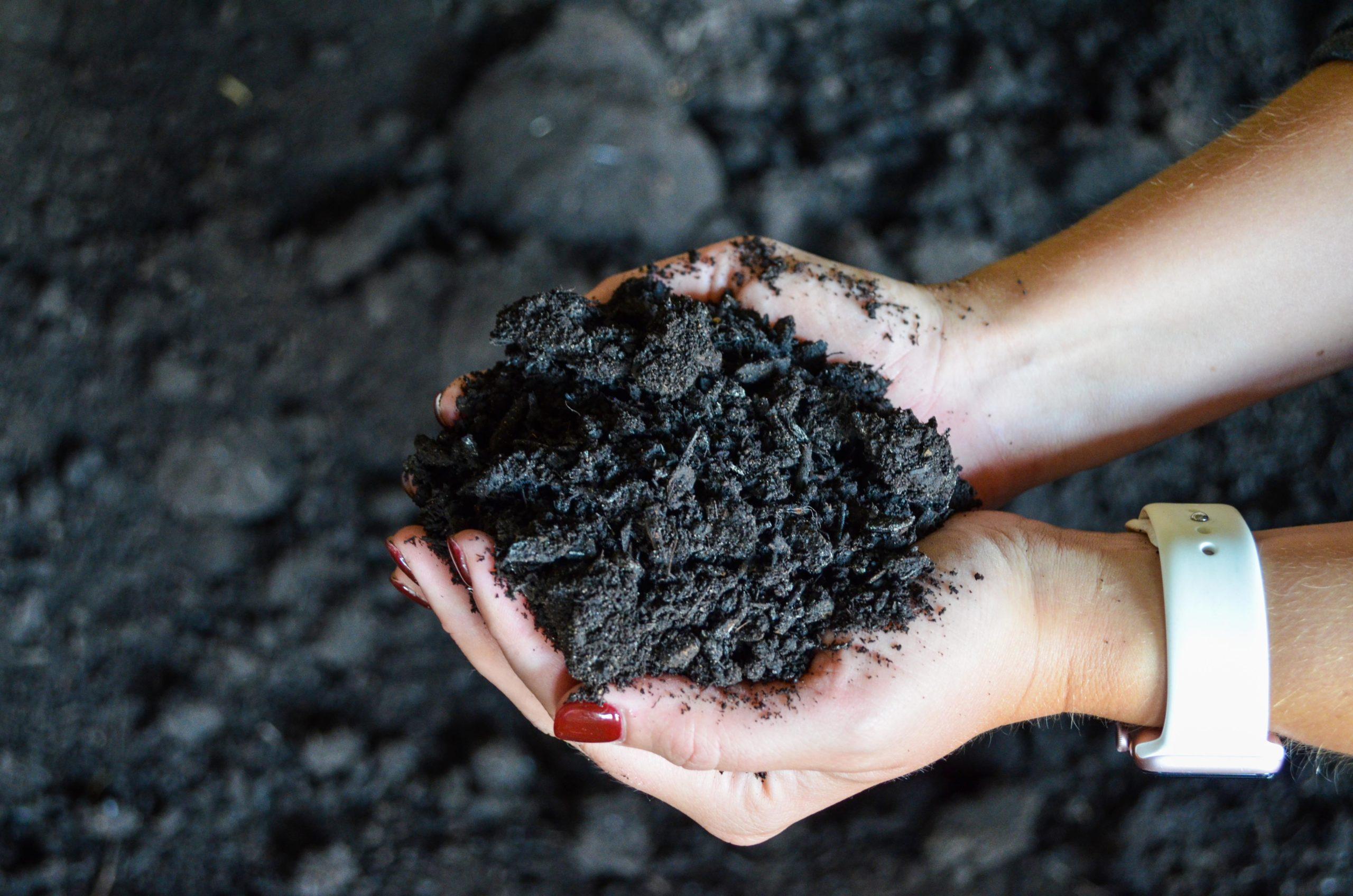 Purple Cow classic compost
